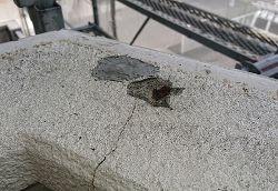 コンクリート爆裂補修