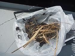 アフター点検で発見した鳥の巣らしきゴミを除去しました